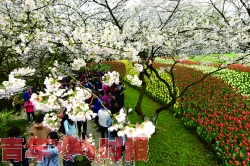 杭州太子湾公园进入年度颜值高峰期