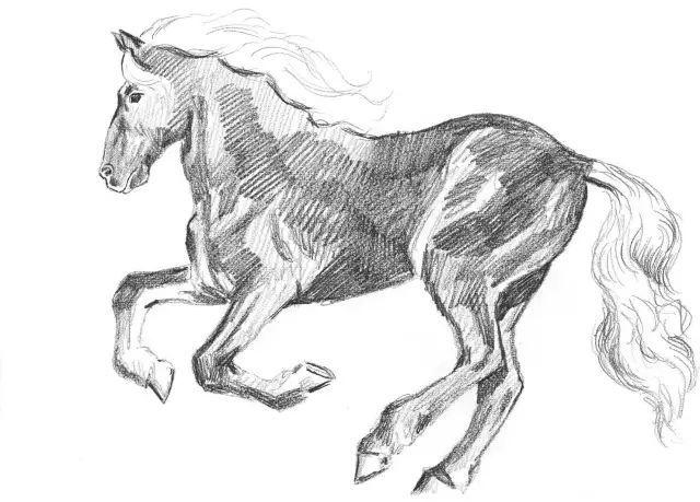 素描教程 零基础五步学会画常见小动物图片