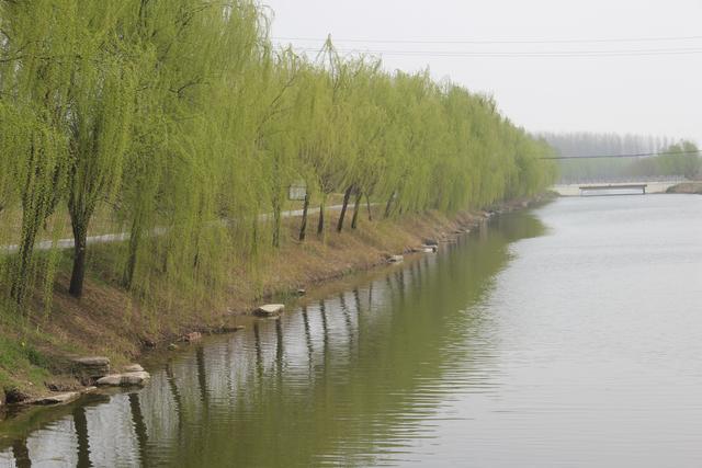 春天,你喜欢这样的画面吗 一条小河,一排柳树,一处风景图片