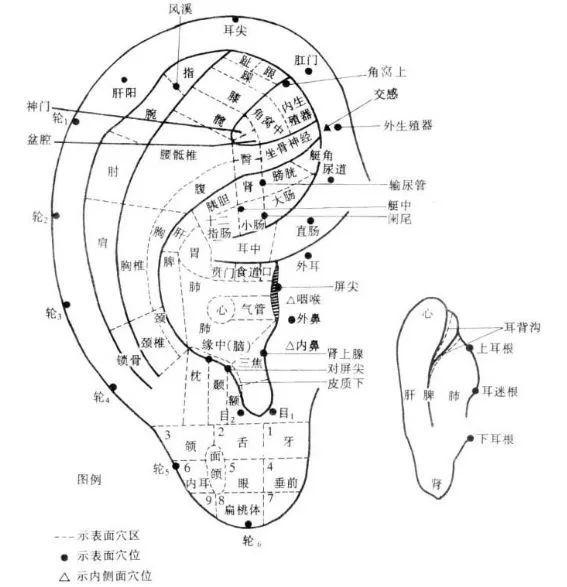 山东颐大中西医针灸推拿整骨职业培训学校微信
