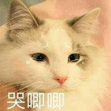 都说杨幂眼睛超有灵气,但18岁的姚晨比她还水灵,是初恋