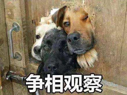 """个头越小寿命越长?盘点那些陪你走过最美时光的""""长寿""""狗狗!"""