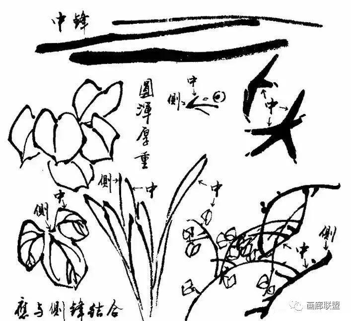 寫意花鳥畫筆墨技法詳解