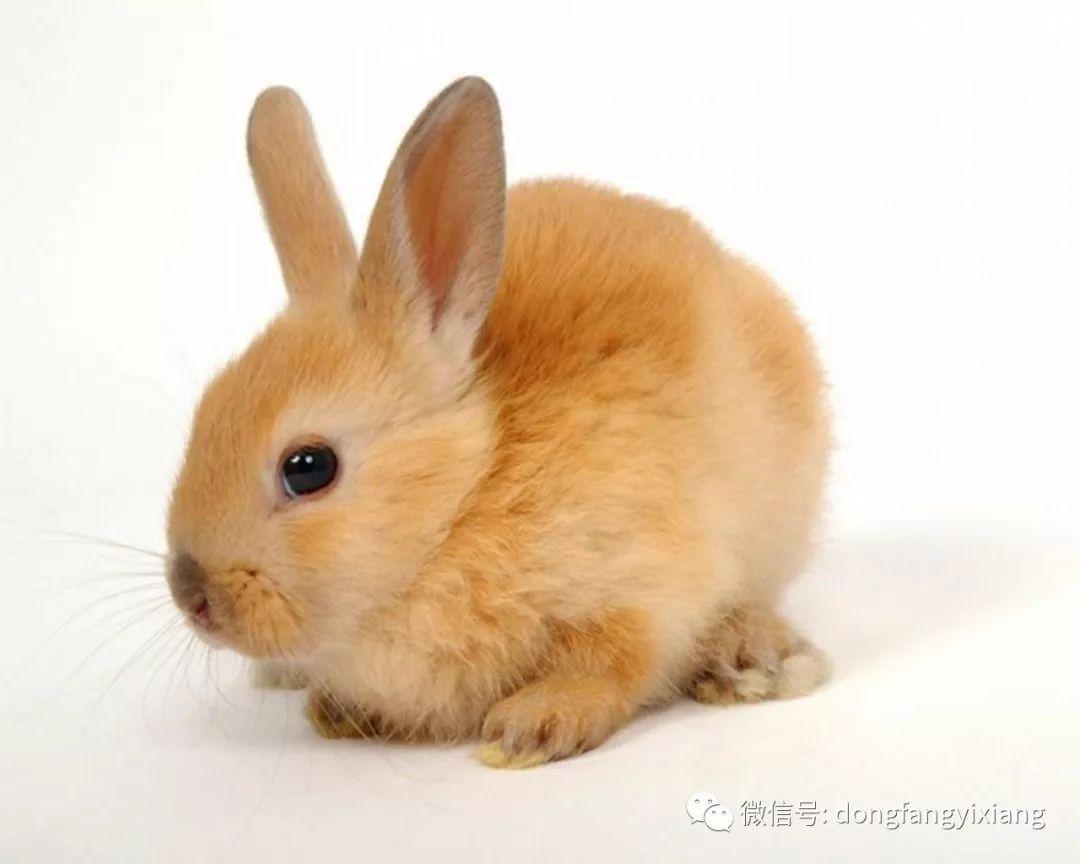 【12生肖明日运势】鼠、虎、兔运势最好,事业爱情方面双丰收…