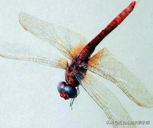 齐白石水墨蜻蜓天下闻名,冷军挑战画红蜻蜓,却败在尾巴上