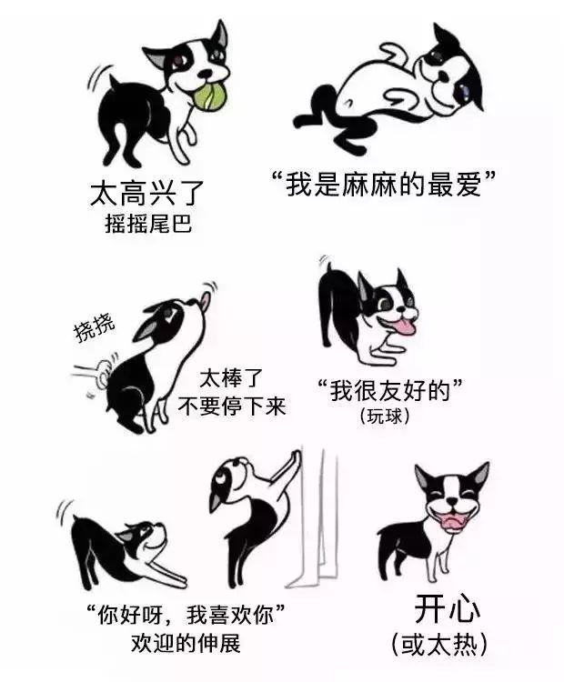 你了解狗狗们的肢体语言吗?