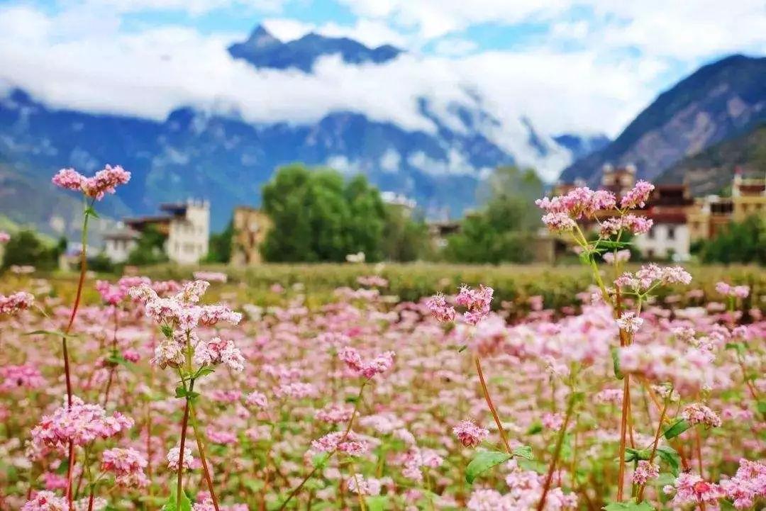 四川春天的第101种颜色——金川梨花