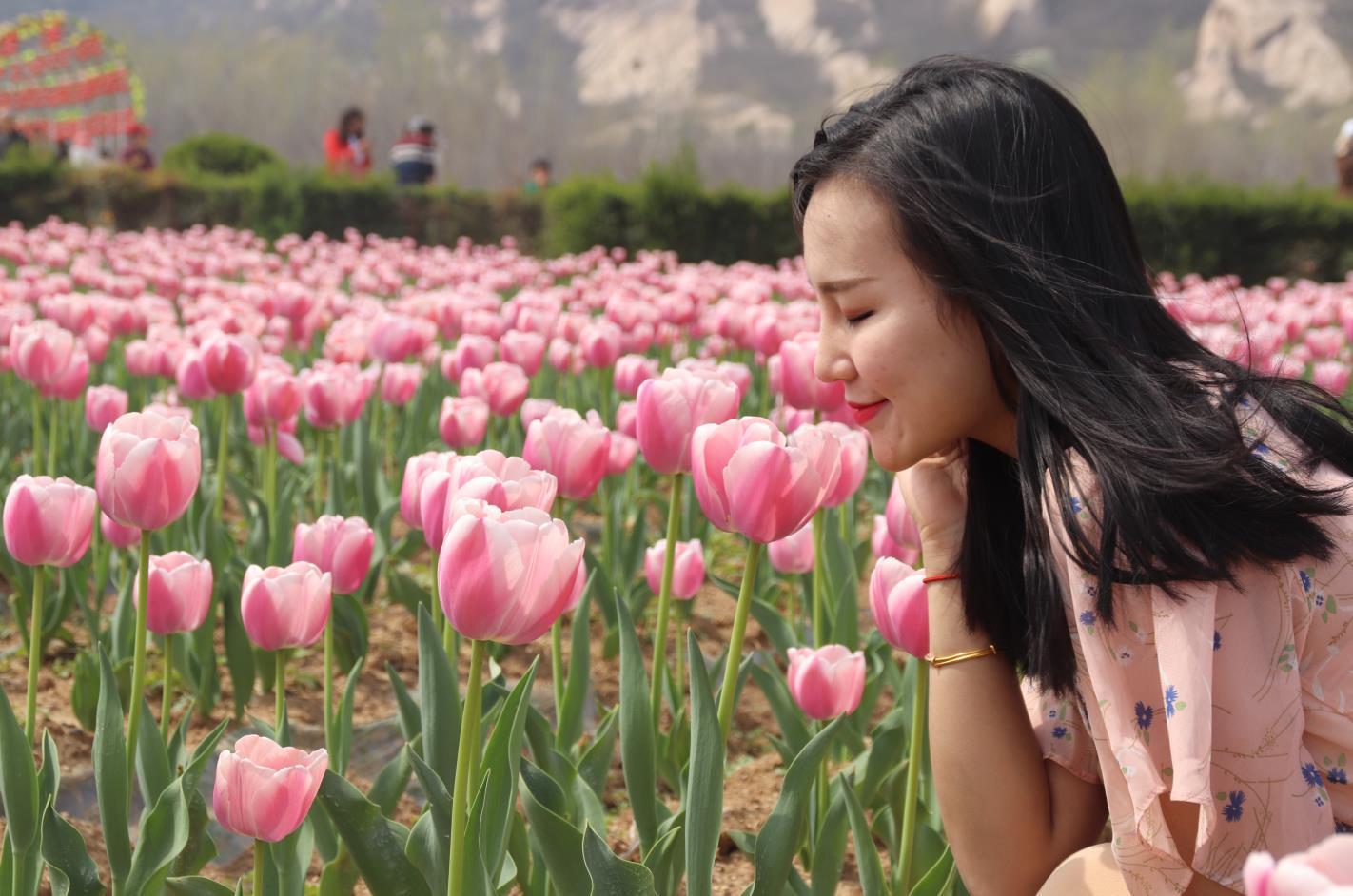 河南遂平嵖岈山千亩郁金香盛开 游客争相拍照