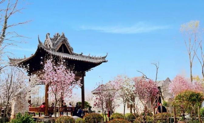 """鄢陵县:""""浪漫花都,樱你而美""""第三届唐韵樱花节盛大开幕!"""