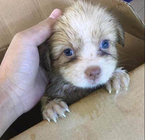 女子捡到流浪小奶狗,去宠物医院打疫苗 医生大惊:狗能否卖给我