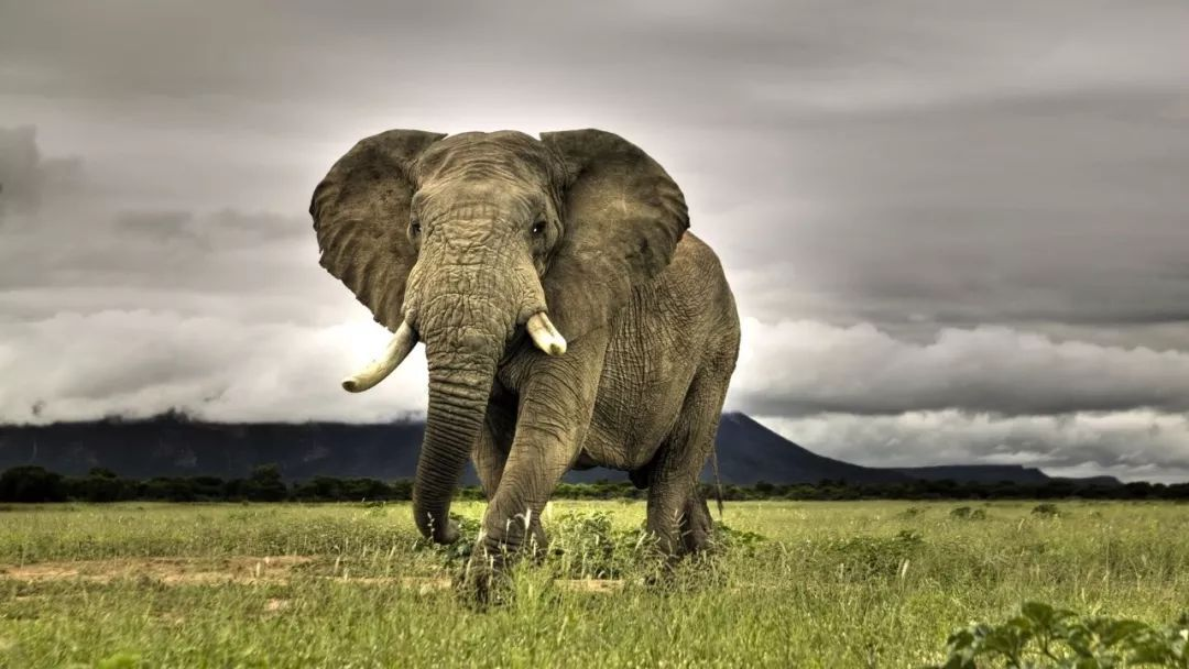 """女子产后变""""大象腿""""! 5年后发现是恶性肿瘤"""