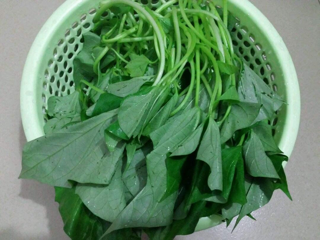 这种野菜不仅猪爱吃,人也爱吃,能全株入药,四季可采!