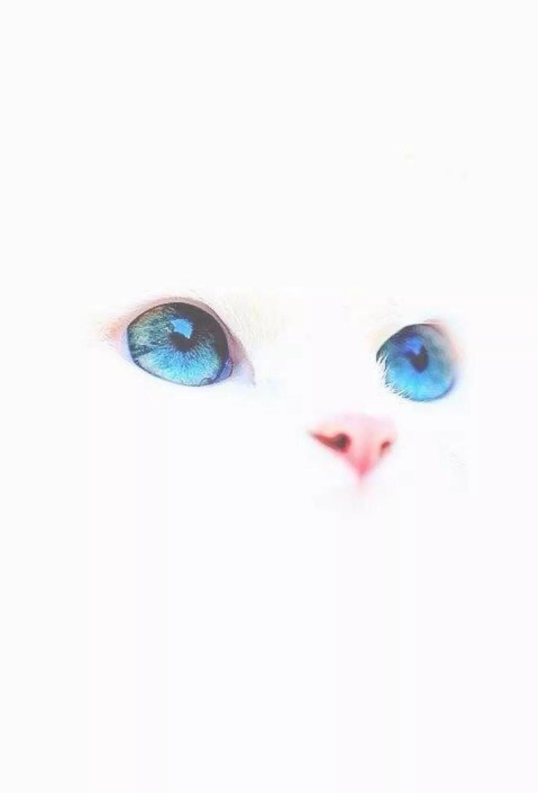 美娜美甲 无事吸猫 ins 猫眼甲跟风一波