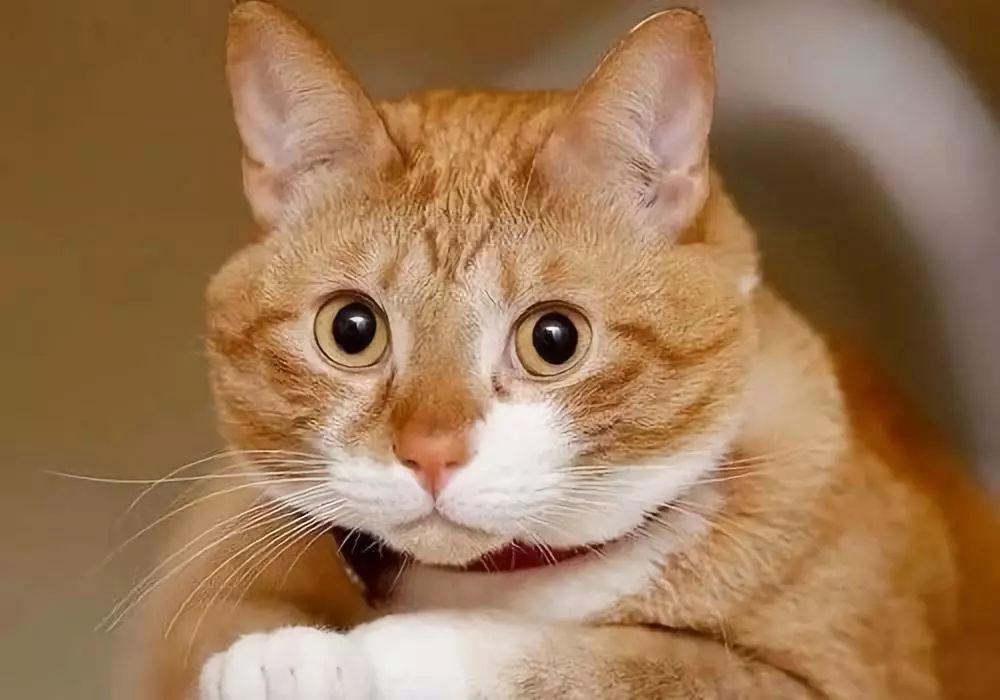 """猫咪跳蚤同伙协同犯案,斩""""蚤""""除根势在必行!(图4)"""