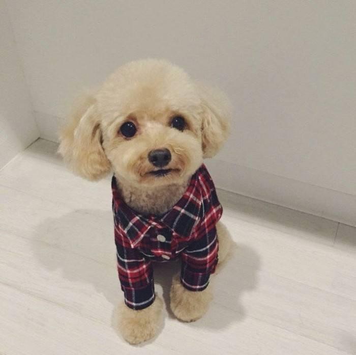 最聪明的狗排名_中国式矛盾 羞辱小孩,但小孩你不能哭