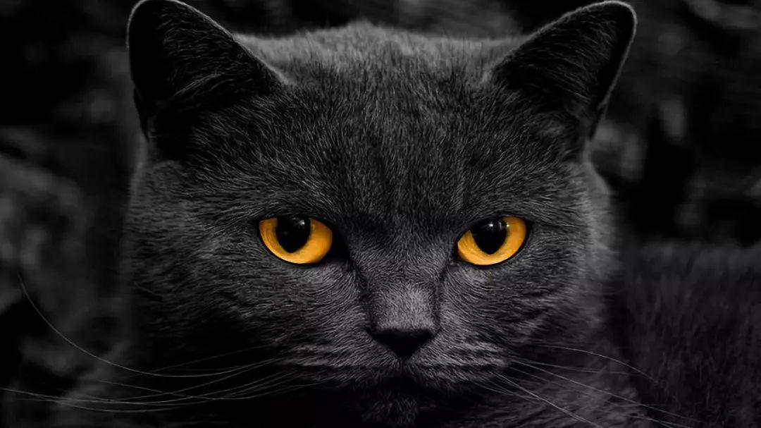 """猫咪跳蚤同伙协同犯案,斩""""蚤""""除根势在必行!(图5)"""