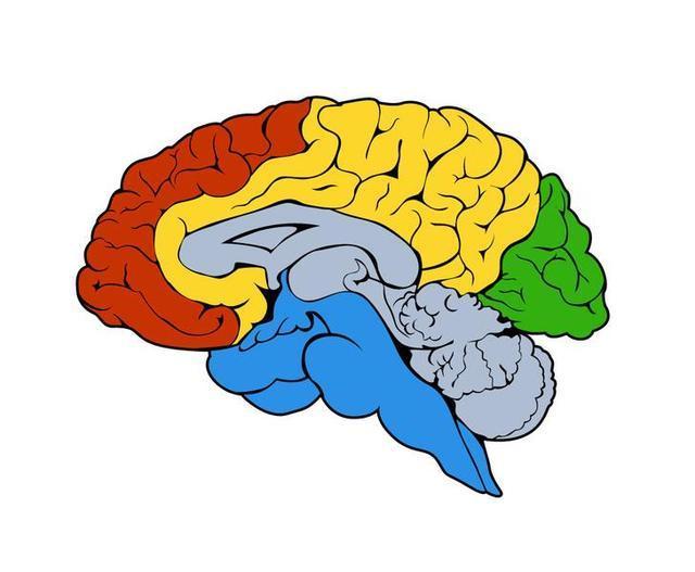 间脑开发,蒙眼识字到底是不是科学的?