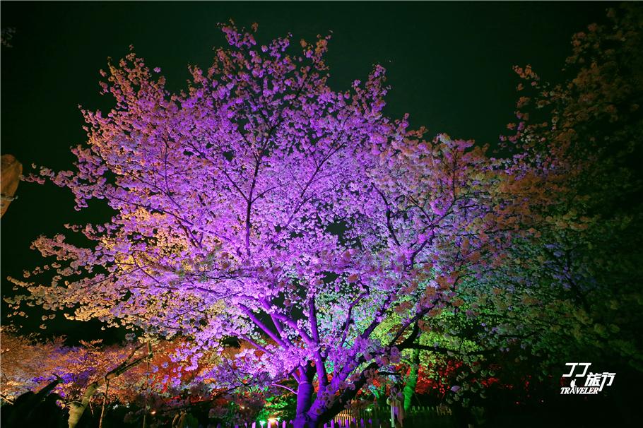 诗舞翩翩_有谁可看过夜晚武汉的樱花,楚风汉韵的夜樱之美动人心魄_人们