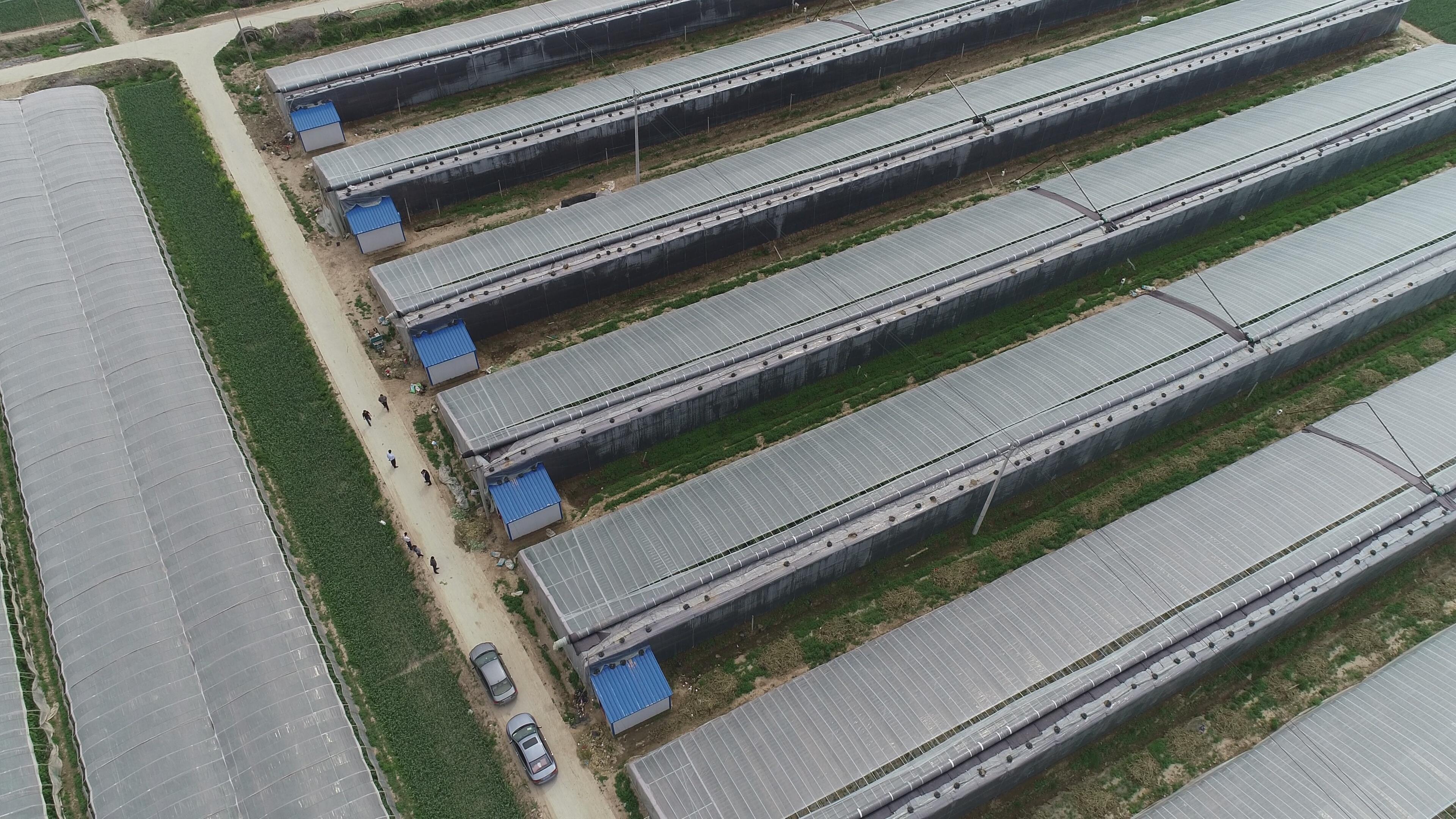 大棚蔬菜栽培技术问答:黑色防草布和地膜那种更好?