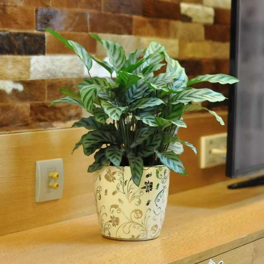 家里光照不好,就养这几种植物,保准可以让植物越长越旺