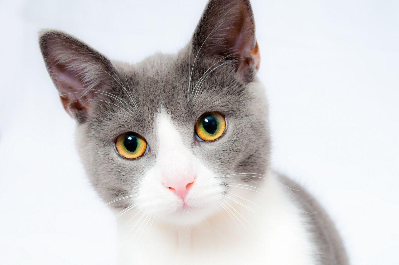 据说,抖音上的猫没有一个是正常的 猫 猫咪 牙刷 新浪网