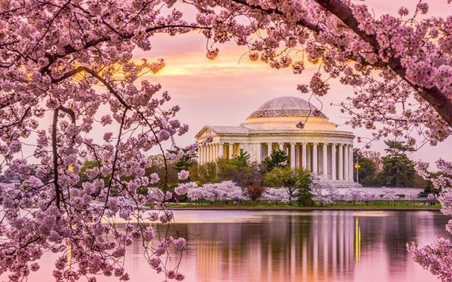华盛顿2019年最新樱花报道