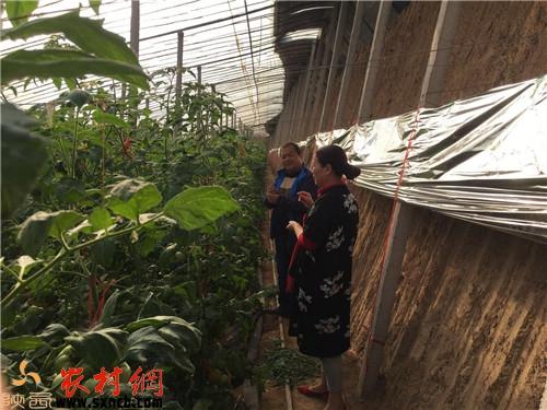 泾阳县云阳镇速记柿种植二十余地理_奋斗省市初中大全口诀远销图片