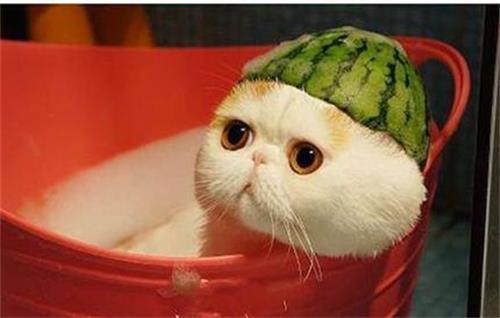 猫藓打针好得快吗,猫癣针伤身体吗