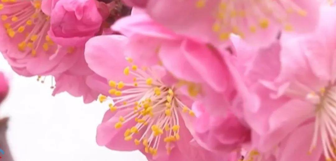 花粉 今年