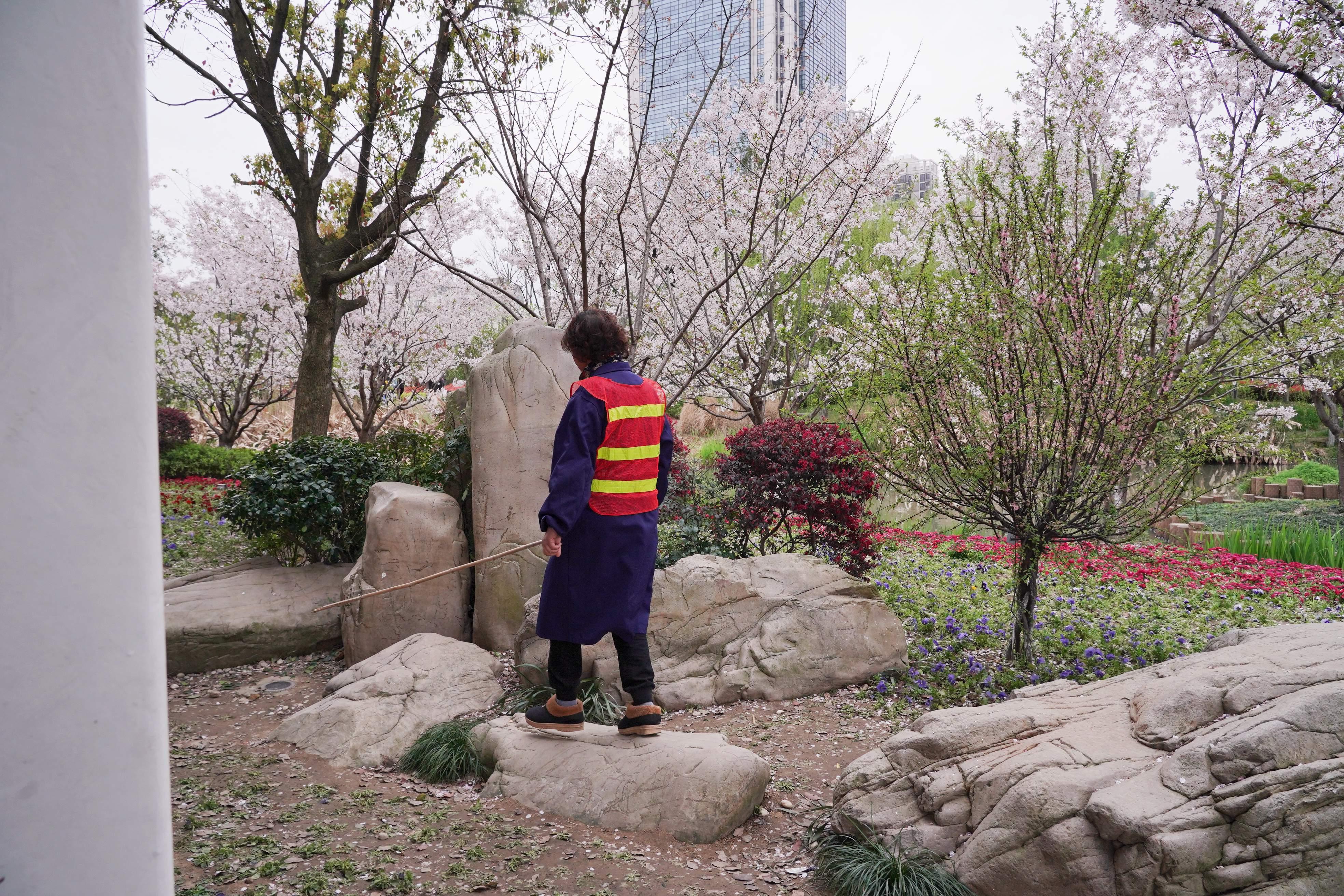 宁波樱花公园樱花正艳,游客众多,却苦了清洁工阿姨