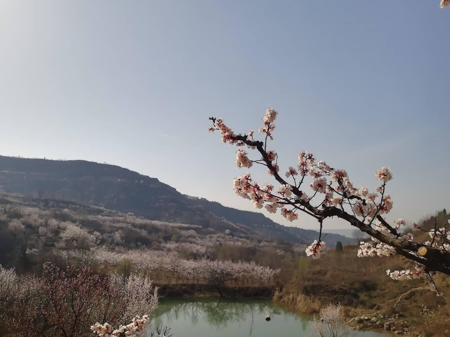 最美人间四月天,不负春光与时行图片