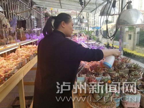 价值上千元的多肉被盗 泸州市民:别再偷了,我教你养