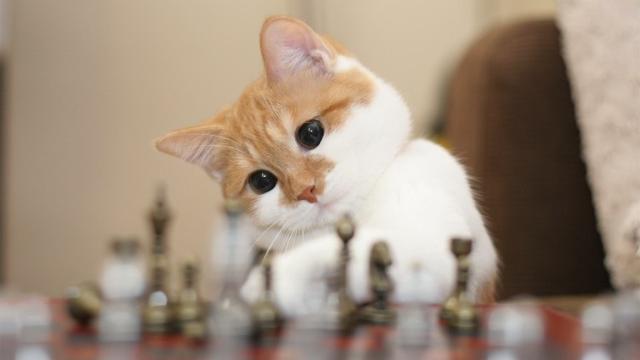 如何抚摸猫咪?想安心的抚摸猫咪吗?