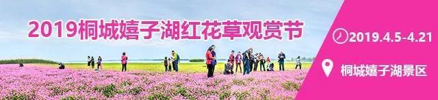 2019桐城嬉子湖红花草观赏节,4月5日盛大开幕,约起来~