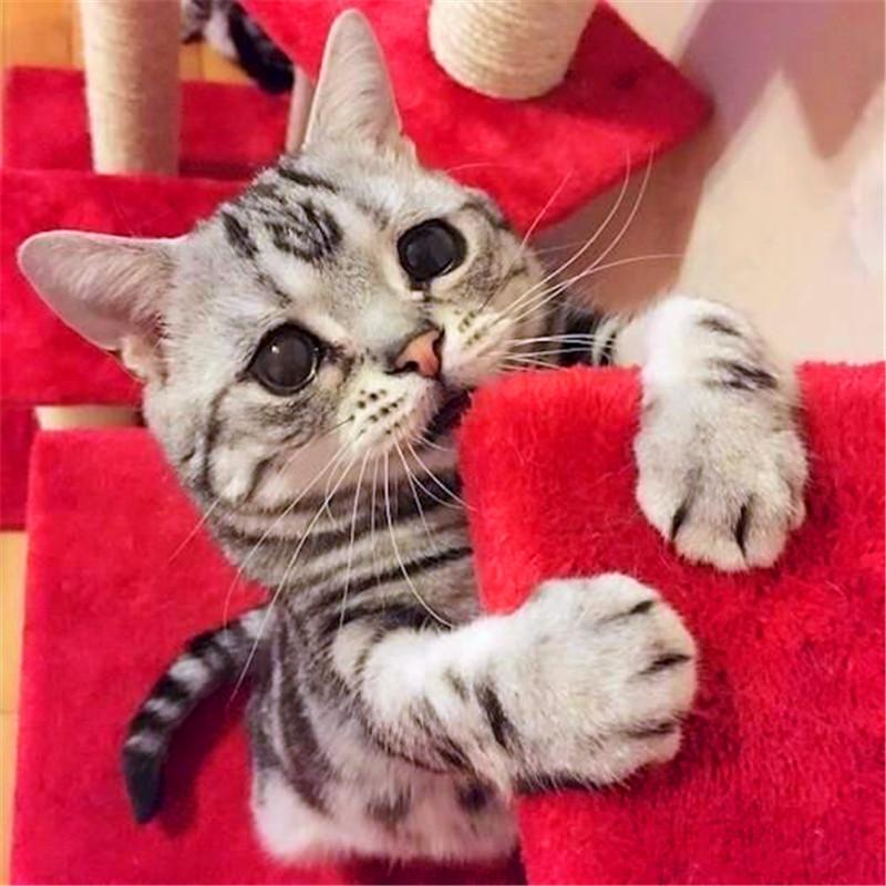 猫咪太无聊,主人只顾打游戏,猫咪 mmp,我还是不是你的小可爱