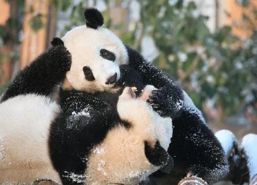 中国旅游新闻网:最高6万元!四川阿坝州有奖征集