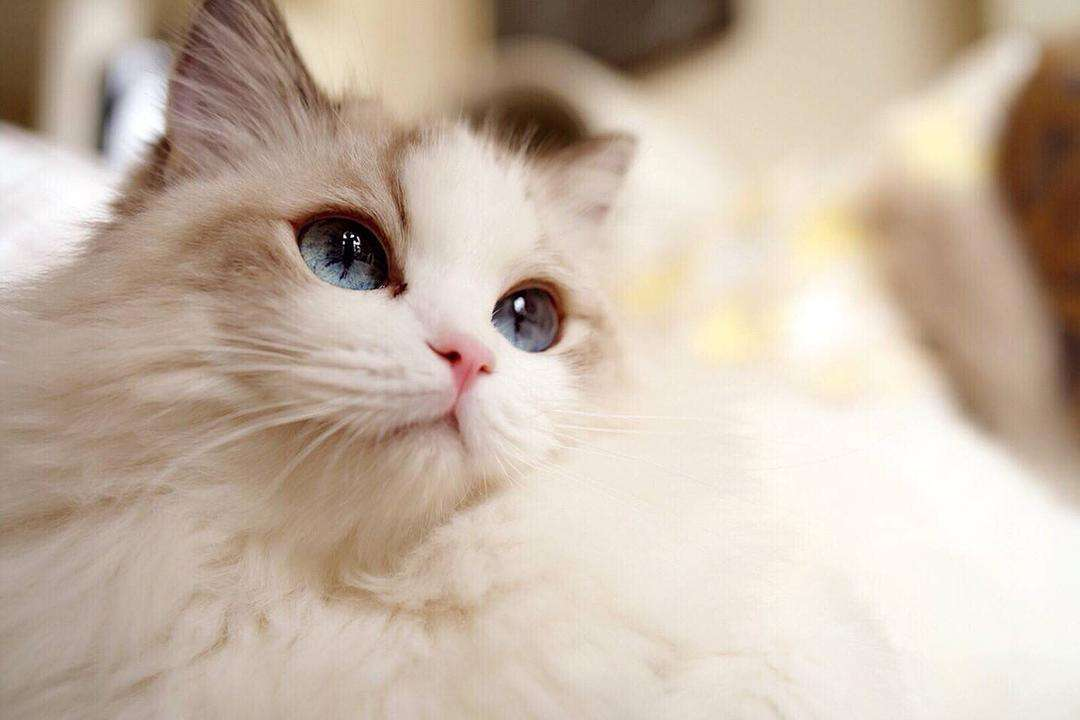 """猫的""""反社会倾向"""",你们知道吗?"""