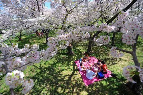 春游好去处,原来山阳梨花节定在这一天!