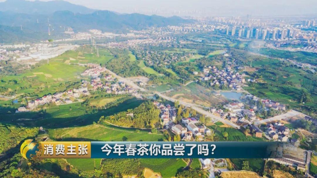 明前茶贵如金!一万元一斤的明前西湖龙井为啥能卖这么贵?