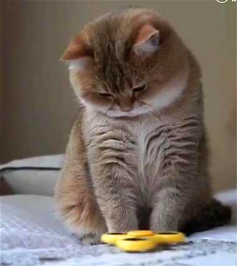 家里的猫咪最近遇到了一件事不明白,想的头都大了