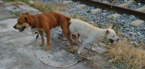 狗狗乳腺炎症状_都说狗狗绝育好,到底好在哪里?建议宠主们都进来看看!_症状