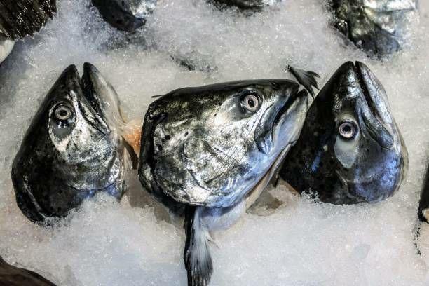 警惕!鱼的这个部位千万别乱吃,可能……