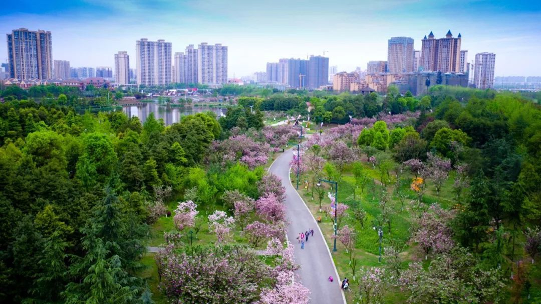 青白江区 人口_青白江区规划图