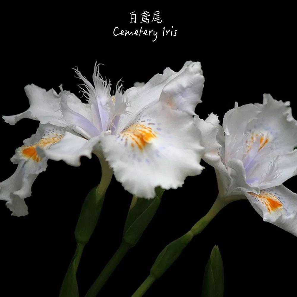 七种最美的小白花,思念离去的那个人
