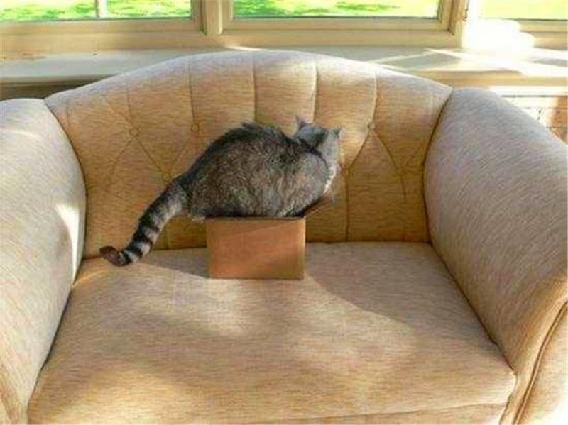 人类永远搞不懂喵星人神奇的脑回路,猫咪在做什么?