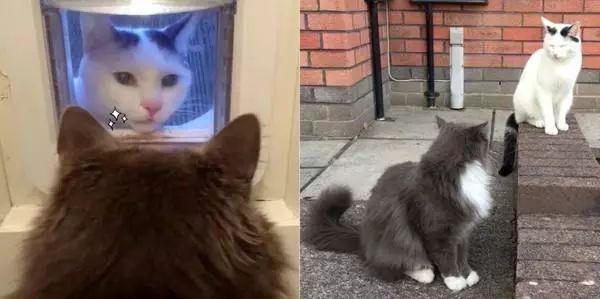 邻居猫每天都来,隔猫门迷之微笑对视小哥哥