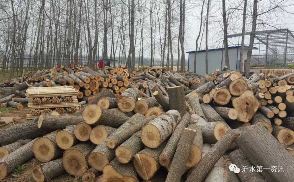 沂水一男子砍了200多棵自家樹,結果進了班房!