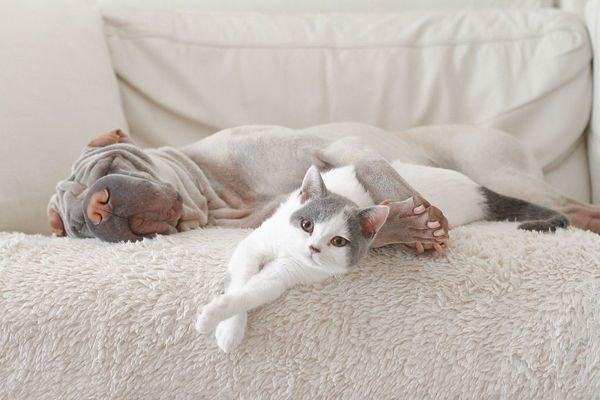 猫得螨虫的症状_猫咪得猫藓初期症状,猫藓怎么治疗好?_消毒
