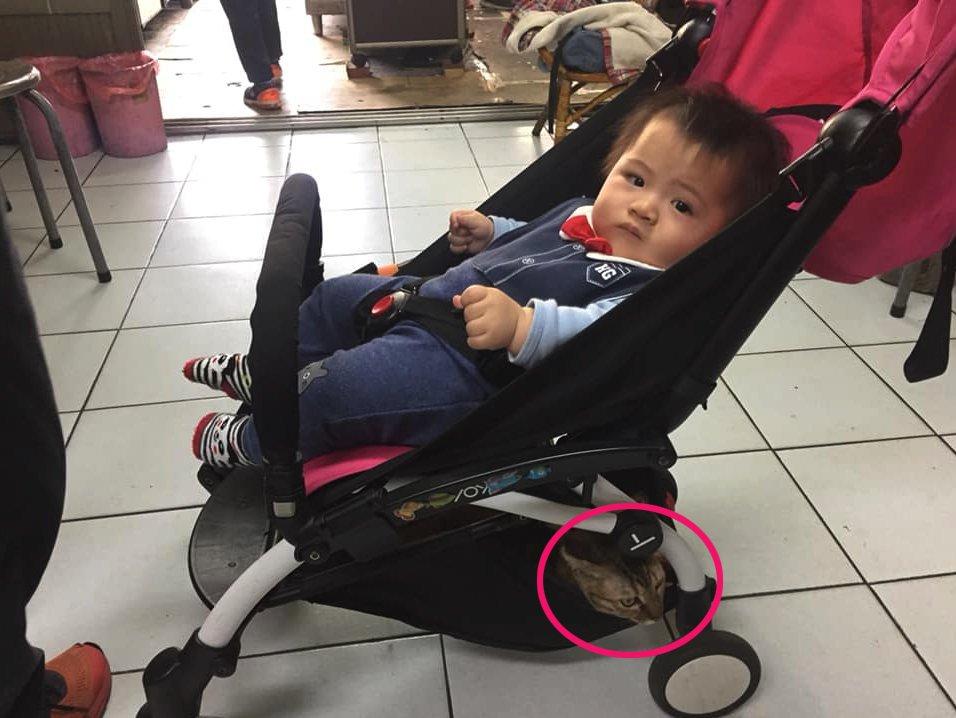 <b>清明节回老家祭祖,婴儿车突然增重,爸爸:先生哪位?</b>