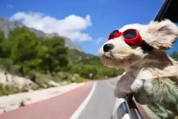 奔驰女车主抱2条狗开车,交警拦下一看,彻底懵了!